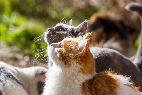 Gatos tomando sol