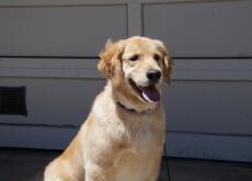 Companhia aérea usa cães para aliviar estresse