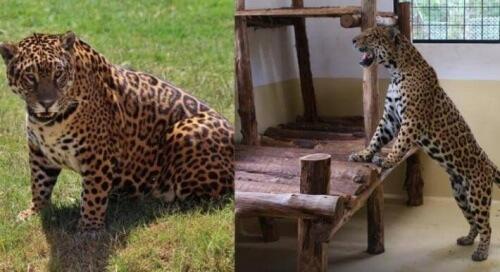 jaguar-e1457712635173