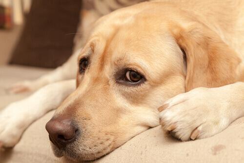Medo do escuro: Cães que não andam de noite