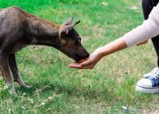 menino-resgata-cães-de-rua