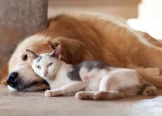As mudanças climáticas afetam os cães e os gatos