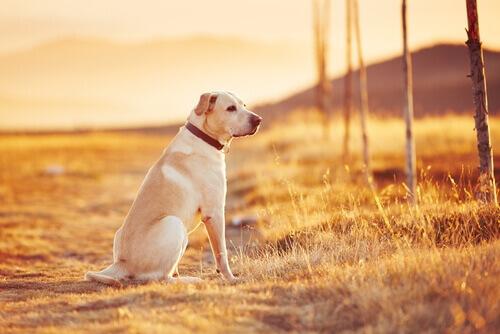 Abandono de animais gera multa de até 30 mil euros na Espanha