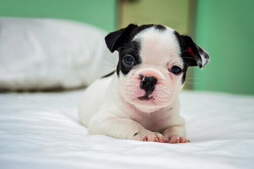 Faça com que seu novo cão sinta-se em casa