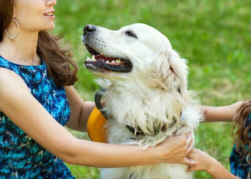 o-cão-e-o-hormônio-do-amor