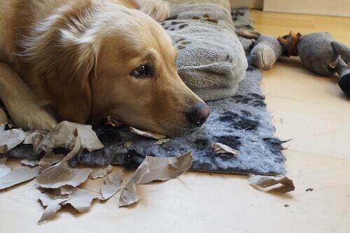 o-cachorro-quando-está-sozinho-faz-destruições