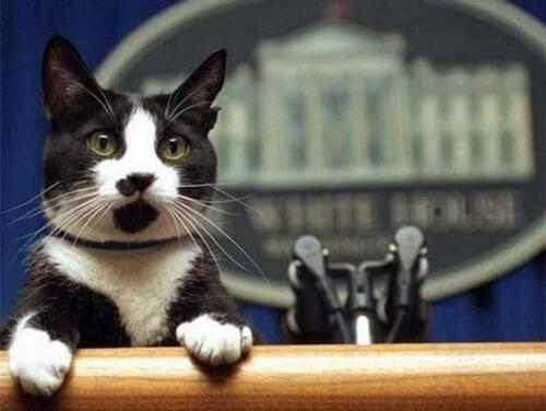 O dia internacional dos gatos