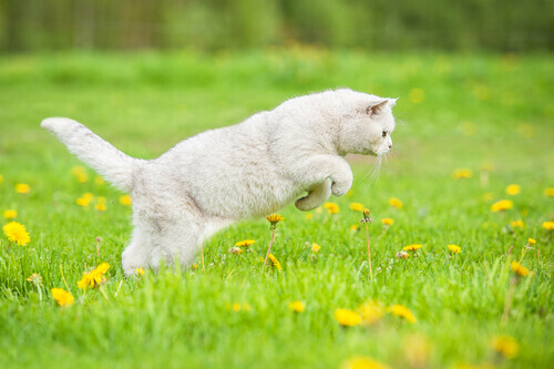 Gatos caçam