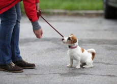 reforços-positivos-para-cães