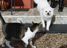 um-cão-e-dois-gatos-salvam-a-vida-de-uma-familia