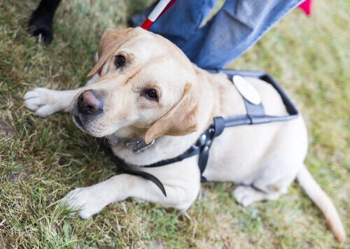 Cães guias acompanharão idosos em asilos