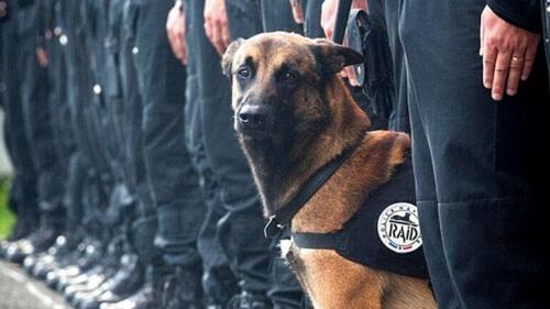 Diesel, o cão herói