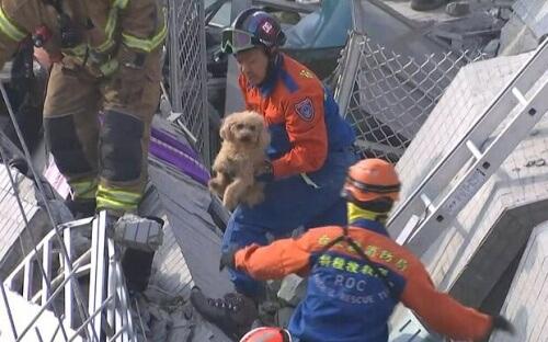 Resgataram um cão dos escombros