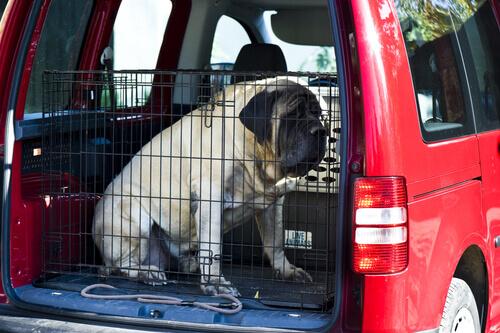 cachorro em gaiola de transporte