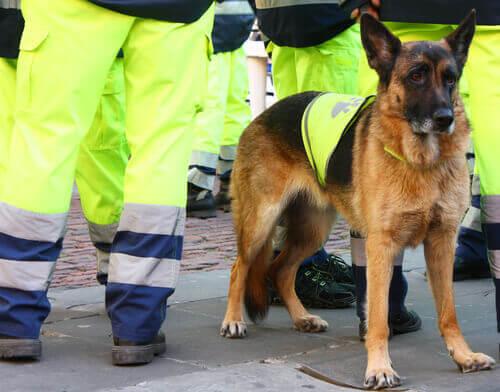 Morre Átila, um dos melhores cães salva-vidas da Espanha