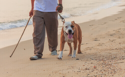 Cachorro passeando na praia