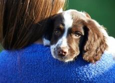 câncer em seu cão