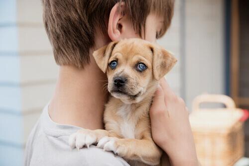 Os cães ajudam seus filhos na luta contra a asma