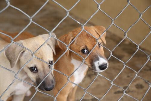 Cães em um abrigo