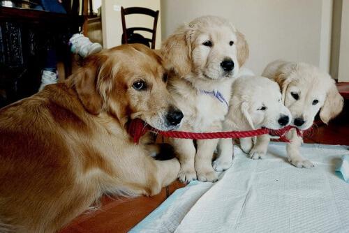Cachorro com filhotes
