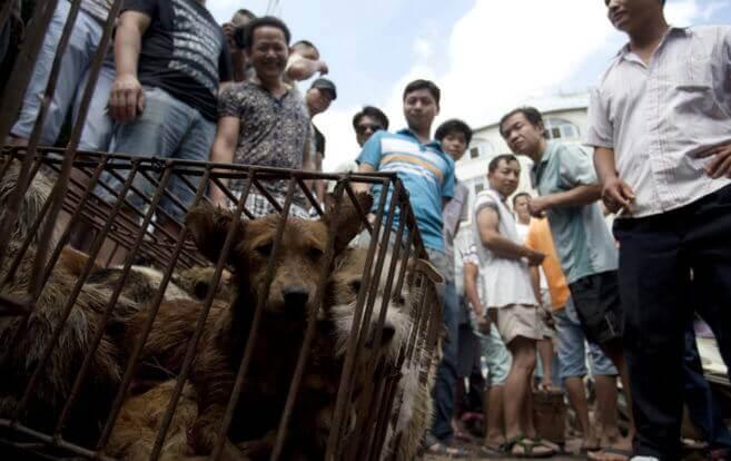 Cães em gaiola