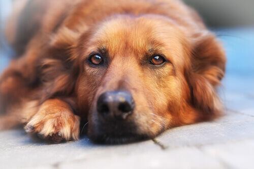 Ervas que relaxarão o seu cachorro são grandes remédios naturais