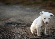Como resgatar um cão de rua