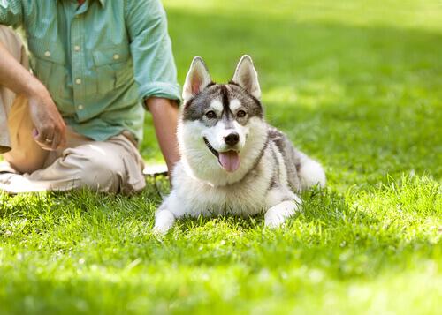 Cachorro na grama