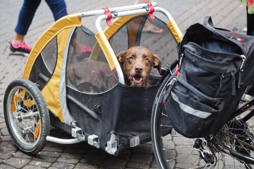 Cão percorreu de bicicleta todo o Peru