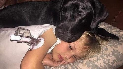 Cachorro com menina
