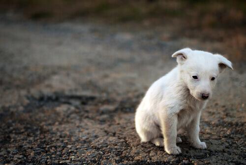 Como resgatar um cão de rua?