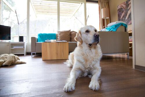 Cachorro na sala