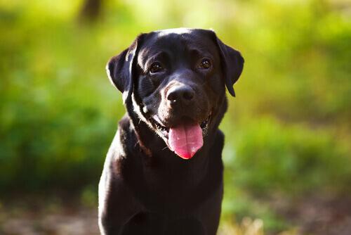 cão salva dono