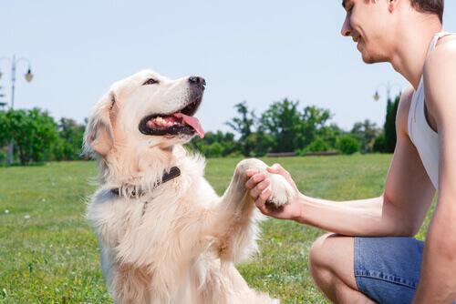 Cachorro pode diferenciar o senso de humor