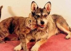 Salvar gatos