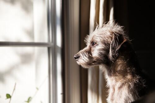 Cachorro no janela