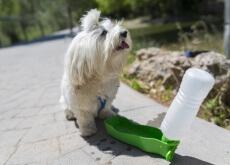 Fazer um comedouro para cães
