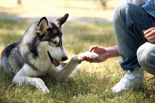Cachorro dando a pata