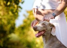 Animal de estimação beneficia a gravidez
