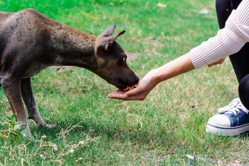 Cachorro comendo na mão