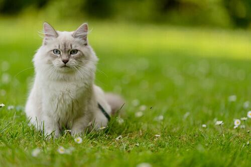 Como entender o seu gato?