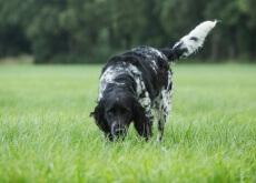 estimular o olfato do seu cão