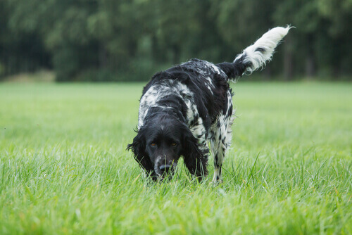 Estimular o olfato de seu cão