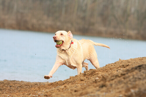 Como conseguir que seu cão emagreça