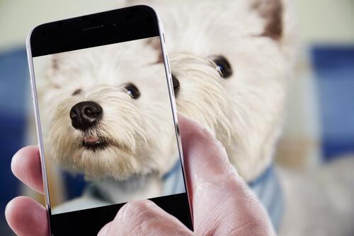 aplicativo para encontrar cães perdidos