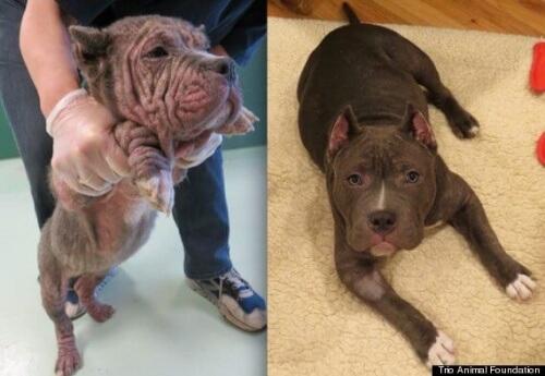 Fotos de cães antes e depois de serem resgatados
