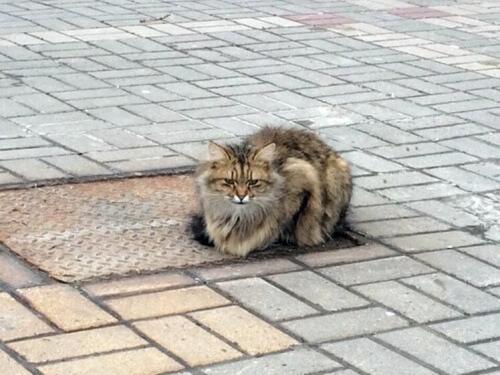 Um gato abandonado espera por seu dono há mais de um ano
