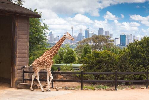 Costa Rica se torna o primeiro país do mundo a fechar os zoológicos e proibir a caça esportiva