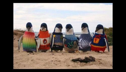 Homem faz pulôveres para pinguins