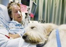 Hospital permite a entrada de animais